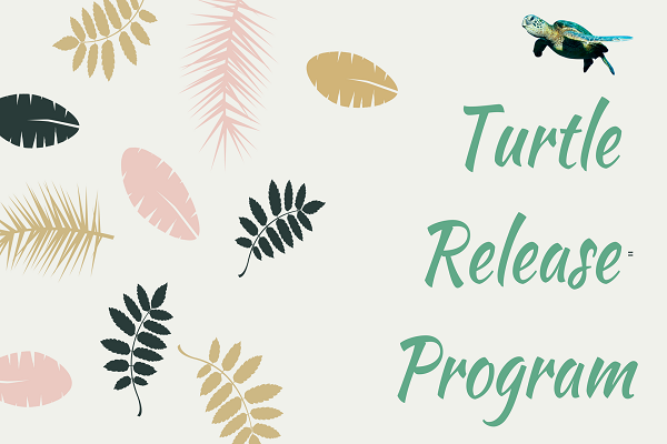 Turtle Release Program at Laguna Redang Island Resort 2018